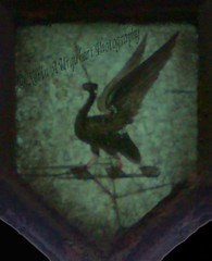 0316  © Kevin A Urquhart  Photography (ElitePhotobox2) Tags: glass liverbird surviving windows st luke's bombed out church