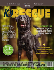 Sal's Magazine (Keshet Kennels & Rescue) Tags: rescue dog labernese magazine cover model handsome black lab grass