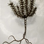 Embroidered Rosemary by Karen Gustafson thumbnail
