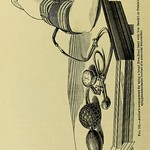This image is taken from Page 78 of Therapeutics of the circulation : eight lectures delivered in the spring of 1905 in the physiological laboratory of the University of London thumbnail