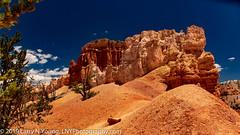 The Colors of Bryce Canyon Hoodoos (LNY_Photography) Tags: bryce brycecanyon brycecanyonnationalpark usa utah blue eroded hoodoos landscape photography rocks scenicnature shape