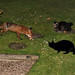 Friends for Dinner: The Wildlife Cafe tonight