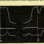This image is taken from Page 33 of Therapeutics of the circulation : eight lectures delivered in the spring of 1905 in the physiological laboratory of the University of London thumbnail