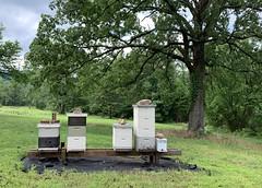 2019 Hives (Jeff Attaway) Tags: bee bees beekeeping apiary langstroth langs hive hives deep deeps