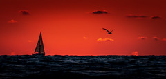Sailing & Soaring Into The Sunset (Michael Smith PhotoArt) Tags: crescentbeach siestakey sarasota florida seascape sailboat sunset landscapephotography sunsetphotography seascapephotography