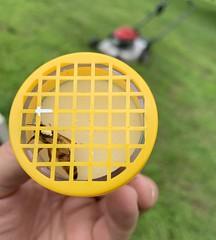 Queen Marking (Jeff Attaway) Tags: bee bees beekeeping queenmarking queen