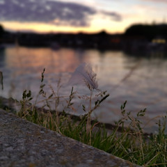 Dusk (Mellisapix) Tags: grass path sky sun twilight sunset white reflection water pastels soft dreamy harbour evening dusk light feather nature outdoors dof