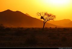 Sunset, Near Sesriem, Namibia (JH_1982) Tags: sky evening sun glow sunset ocaso sonnenuntergang coucherdesoleil pôrdosol tramonto закат zonsondergang zachódsłońca solnedgång solnedgang auringonlasku apus залез matahariterbenam mặttrờilặn 日落 日没 غروب light yellow licht abend dusk dämmerung mountains mountain gebirge silhouette silhouettes trees tree landscape nature scenery scenic desert wüste africa namib sesriem namibia namibië 纳米比亚 ナミビア 나미비아 намибия natur african