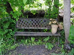 Nadia Kajouji's derelict memorial bench in Brantwood Park in Ottawa, Ontario (Ullysses) Tags: nadiakajouji suicide carletonuniversity williammelchertdinkel ottawa ontario canada spring printemps brantwoodpark cleggstreet memorial bench banc student étudiante riviererideau rideauriver