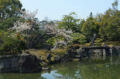 KYO_Nijo_Castle_10 (chiang_benjamin) Tags: kyoto japan nijocastle spring garden