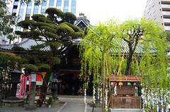KYO_Rokkakudo_Temple_02 (chiang_benjamin) Tags: kyoto japan rokkakudo temple garden spring willow