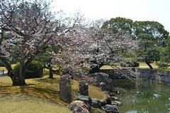KYO_Nijo_Castle_11 (chiang_benjamin) Tags: kyoto japan nijocastle spring cherryblossom flowers trees garden