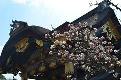 KYO_Nijo_Castle_06 (chiang_benjamin) Tags: kyoto japan nijocastle spring cherryblossom flowers trees
