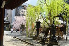 KYO_Rokkakudo_Temple_07 (chiang_benjamin) Tags: kyoto japan rokkakudo temple garden spring willow