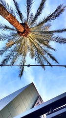 Up 2019 #travel #tropic #up #palm #light #blue #bluesky #clean #AZ #calm #relax #mood (hsfinton) Tags: travel tropic up palm light blue bluesky clean az calm relax mood