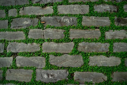 Green Garden Path
