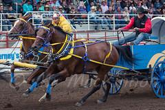 Ponoka Stampede 2016 (tallhuskymike) Tags: ponoka stampede event ponokastampede 2016 cowboy horse horses wpca worldprofessionalchuckwagonassociation action alberta western wagon racing race