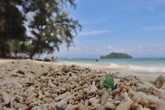 SeaGlass (BaboMike) Tags: malaysia kotakinabalu kinabalu seaglass beach ocean coral