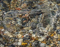 Closeup of Lake Michigan water flowing over pebbles on a beach near Leland, M, I06-08-2019 019