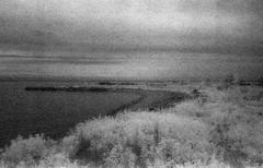 Infrared Leslie spit (Mr Kevino) Tags: kodak hie ir infrared film 35mm toronto lesliespit