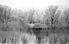 Swan Lake (Mr Kevino) Tags: kodak hie ir infrared film 35mm toronto lesliespit swan