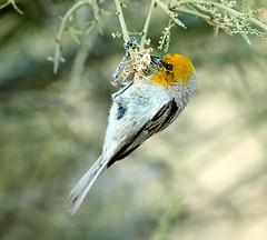 06182019000006583 (Lake Worth) Tags: rabbit rabbits bird birds nature