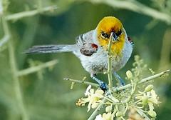 06182019000006573 (Lake Worth) Tags: rabbit rabbits bird birds nature