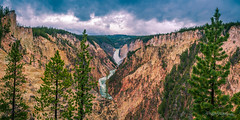 Grand Canyon of the Yellowstone (dan@propeakphotography.com (out shooting on locati) Tags: america artistpoint blue clouds colors famousplace forest grandcanyonoftheyellowstoneriver green iconic internationallandmark landscape lowerfalls nps nationalpark nature northamerica orange panorama places rocks southrim spring texture touristattraction traveldestination travelandtourism trees unescoworldheritagesite usa unitedstates water wyoming yellow yellowstonenationalpark yellowstoneriver waterfall pinnaclephotography 150faves poeexcellence