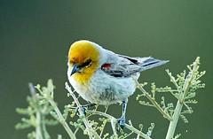 06182019000006549 (Lake Worth) Tags: rabbit rabbits bird birds nature