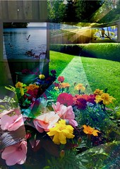 Garden wall-pictures (i_kaya@rogers.com) Tags: garden art wallpictures pictures photograph photography grass trees photo geese bird seagulls gardenwallpictures