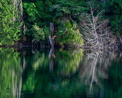 Reflecting on nature. (Picture-Perfect Pixels) Tags: park trees canada water reflections britishcolumbia vancouverisland centralsaanich gowllandtodprovincialpark todinlet abstract peaceful tranquil greens flickrexplorejune192019