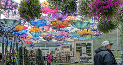 Colorful Gift Shop - Explore (June 19th, 2019 - #75) (TQTran) Tags: glaciergarden giftshop colorfulumbrellas umbrellas glacier garden gift shop juneau alaska ak