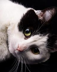 Aurora (Julian Rossi) Tags: cat cats kitty kitties adorable cute