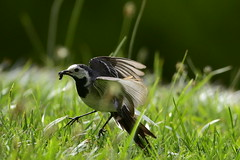 Cazadora (larisamorozz) Tags: birds nature aves espaňa