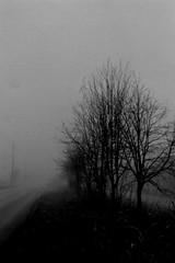 Foggy morning (shou yokoya) Tags: analogue bessat bw film 35㎜ 135 kodak trix 400tx 400 rangefinder mocochrome fog foggy