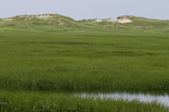 Great Island Hike (brucetopher) Tags: beach park sea ocean coast coastal saltmarsh marsh wetland green grass water wet dune dunes sanddunes eelgrass seacoast seashore nationalpark