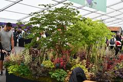 Acer Plant Stall (Bri_J) Tags: rhs chatsworthflowershow2019 chatsworthhouse edensor derbyshire uk chatsworth flowershow nikon d7500 acer plantstall floralmarquee flowers