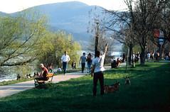 Dog play (lumpy79) Tags: pentax me smc 135 fuji provia 100f dog play smcpk135mmf35 nagymaros
