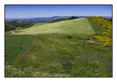 n°3 D122. Ardèche. (avibla66) Tags: tapis herbe paysage