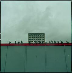 pigeons (steve-jack) Tags: hasselblad 501cm 50mm cfi lomography colour 800 film 120 6x6 medium format harlow pigeons tetenal c41 kit epson v500 rain