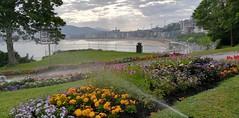 Regando los Jardines de Miramar. Donostia. (eitb.eus) Tags: eitbcom 32961 g151065 tiemponaturaleza tiempon2019 flora gipuzkoa donostiasansebastian jonhernandezutrera