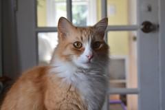 ネコ 画像