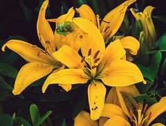 (lgold86) Tags: flowers garden flower park parks beauty nature