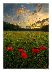 In to the poppies (jos.pannekoek) Tags: klaprozen poppie landscape 1424 d850 stack brabant netherlands