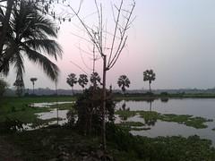 Village Evening (ahashik) Tags: ayemun hossain ashik ayemunhossainashik ahashik village evening bangladesh