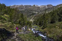De Siscaró a Incles, Principat d'Andorra (kike.matas) Tags: canon canoneos6d canonef1635f28liiusm kikematas bassesdelsiscaró valldincles canillo andorra andorre principatdandorra pirineos paisaje senderismo excursión hiking riudelsiscaró camino bosque montañas nature lightroom6 андорра