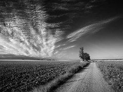 No Direction Home (una cierta mirada) Tags: landcape road path nature outdoors clouds cloudscape tree bnw blackandwhite monochromo sky land earth panasonic dmcgx8 lumix vario ƒ130 dylan