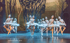 Lago de los cisnes/Swan lake, Ballet Nacional de Cuba (CastroJMadrid) Tags: antonio castro todos los derechos reservados madrid 2019