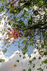Sunlight and Leaves (CloudBuster) Tags: iamsterdam amsterdam holland buldings canals sights sightseeing attractie stad city