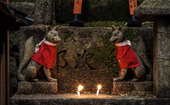 Inari foxes. Hasselblad X1D. (Tim Ravenscroft) Tags: fox inari statuettes shrine shinto candles candlelight kyoto japan